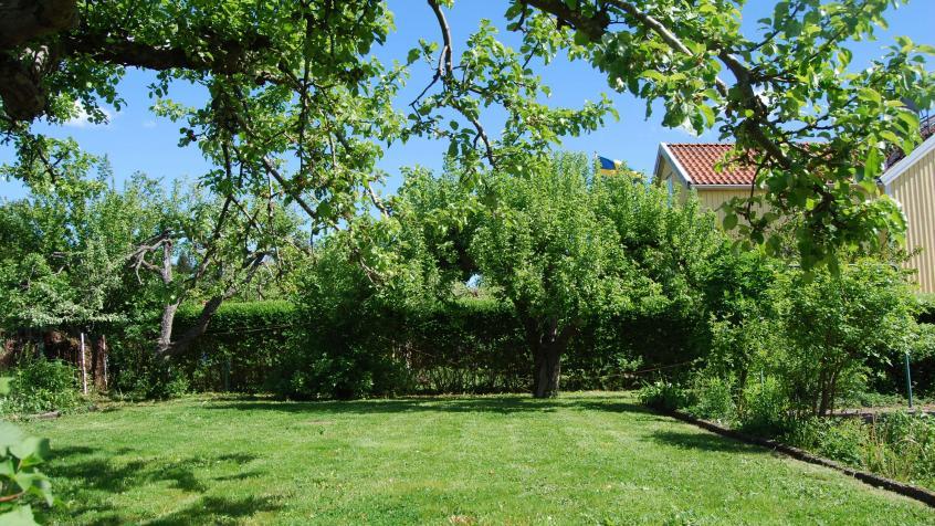 Tips på hur du gör en äng på gräsmattan i trädgården